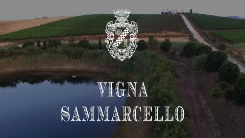 vigna_sammarcello2
