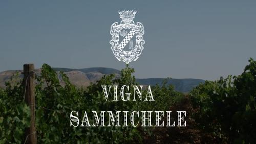 vigna_sammichele2
